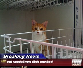 Breaking News - cat vandalizes dish washer!