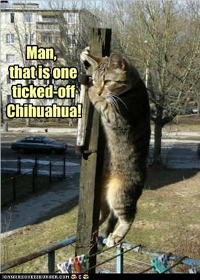 Y quedese alli arriba, usted asquerosamente gato!