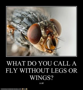 WHAT DO YOU CALL A FLY WITHOUT LEGS OR WINGS?