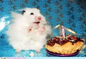 Daily Squee: It Ar Mai Birfday?!