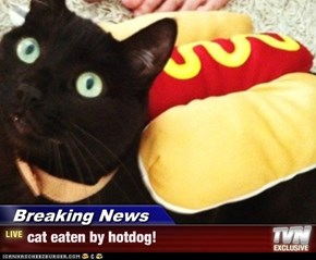 Breaking News - cat eaten by hotdog!