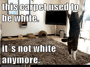 this carpet used to be white.  it`s not white anymore.