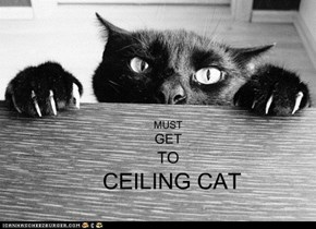 SEEKING CEILING CAT