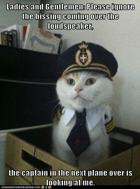 Animal Memes: Captain Kitteh - We May Have to Attack