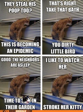 Animal Memes: Introducing Peeping Tomcat