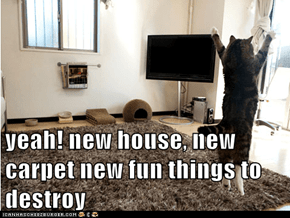 yeah! new house, new carpet new fun things to destroy