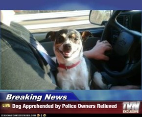 Breaking News - Dog Apprehended by Police Owners Relieved