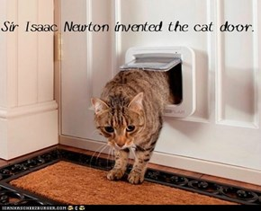 Fun Cat Facts #54