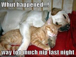 Whut happened...!  way too much nip last night