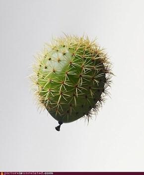 Cactusballoon