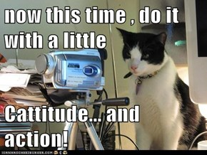 now this time , do it with a little  Cattitude... and action!
