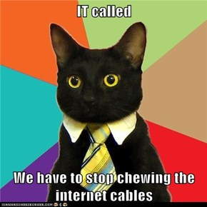 Animal Memes: Business Cat - Maybe if It Didn't Look So Much Like String