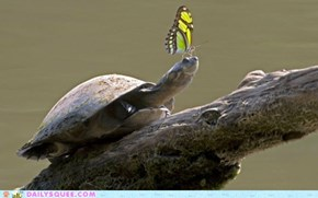 Daily Squee: Interspecies Love - Slow Down, Butterfly