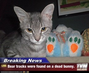 Breaking News - Bear tracks were found on a dead bunny.