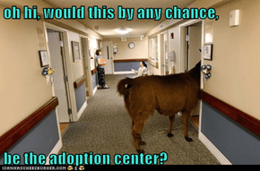 oh hi, would this by any chance,  be the adoption center?