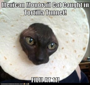 Mexican Monorail Cat Caught in Tortilla Tunnel!  FILM AT 11!