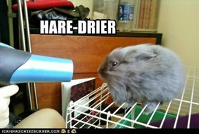 Hair drier drying a hare