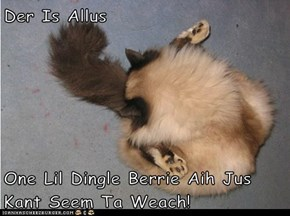 Der Is Allus  One Lil Dingle Berrie Aih Jus Kant Seem Ta Weach!