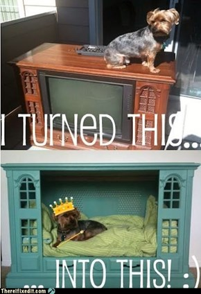 Dog On TV, Dog In TV, What's The Difference?