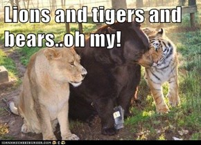 Lions and tigers and bears..oh my!