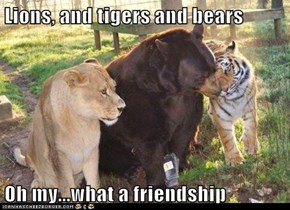 Lions, and tigers and bears   Oh my...what a friendship