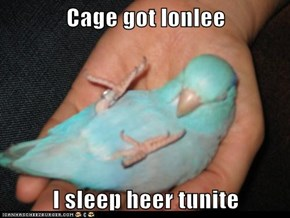 Cage got lonlee  I sleep heer tunite