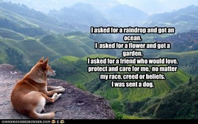 I asked for a raindrop and got an ocean.I  asked for a flower and got a garden.I asked for a friend who would love, protect and care for me,  no matter my race, creed or beliefs. I was sent a dog.