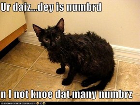Lolcats: Ai Onlee Haz Sew Many Toez...