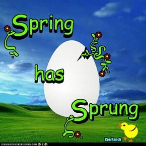 Spring has Sprung....