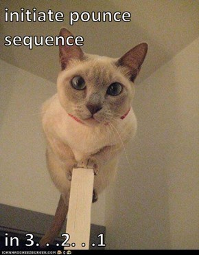 initiate pounce sequence  in 3. . .2. . .1