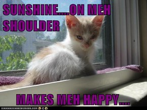 SUNSHINE....ON MEH SHOULDER MAKES MEH HAPPY....