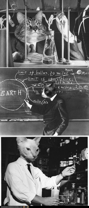 Cat Scientists: Your New Favorite Tumblr!