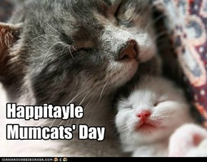 HappitayleMumcats' Day