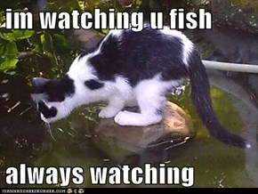 im watching u fish