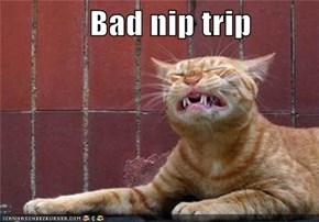 Bad nip trip