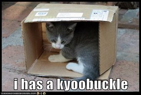 i has a kyoobuckle
