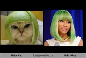 Melon Cat Totally Looks Like Nicki  Minaj