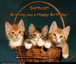 Happy Birthday Slothcat!