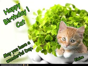 Happy Birthday Cat !