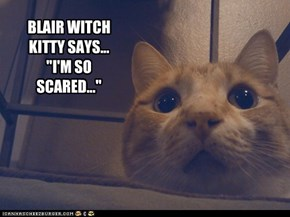 "BLAIR WITCH KITTY SAYS... ""I'M SO SCARED..."""