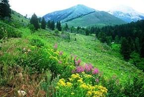 Wildflower field in Sun Valley, Idaho