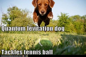 Quantum levitation dog Tackles tennis ball