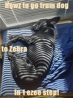 Howz to go frum dog to Zebra in 1 ezee step!