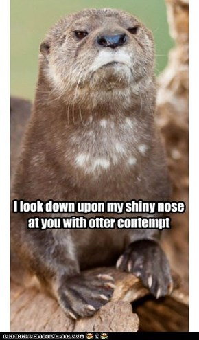 I look down upon my shiny nose at you with otter contempt