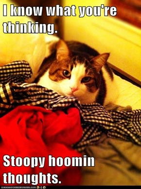 I know what you're thinking.  Stoopy hoomin thoughts.