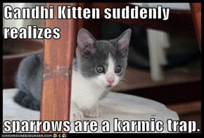 Gandhi Kitten suddenly realizes  sparrows are a karmic trap.
