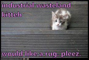 industrial wasteland kitteh  would like a rug. pleez.