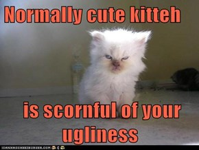 Normally cute kitteh   is scornful of your ugliness