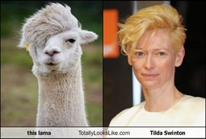 this lama Totally Looks Like Tilda Swinton