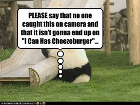 PANDA DERP!